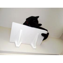 MOLLY - średnia półka dla kota