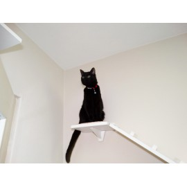 JIMI - pomost dla kota