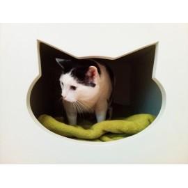 BONO - biały dom dla kota