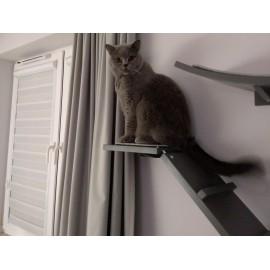 Cat Stair Jimi