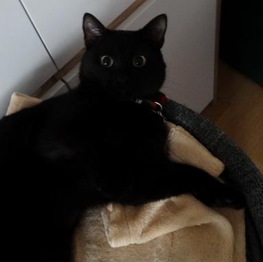 polka-dla-kota